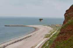 Helgoland_S_Gal_2020_019