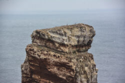 Helgoland_S_Gal_2020_045