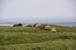 Helgoland_S_Gal_2020_068