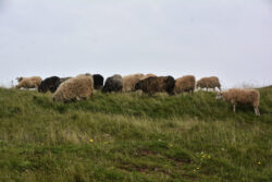Helgoland_S_Gal_2020_070