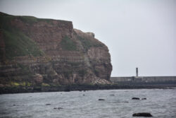 Helgoland_S_Gal_2020_090