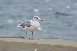 Helgoland_S_Gal_2020_097