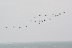 Helgoland_S_Gal_2020_102