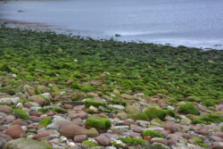 Helgoland_S_Gal_2020_215