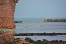 Helgoland_S_Gal_2020_219