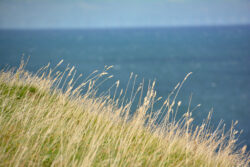 Helgoland_S_Gal_2020_222