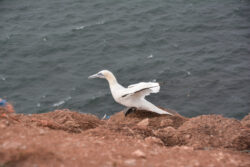 Helgoland_S_Gal_2020_235