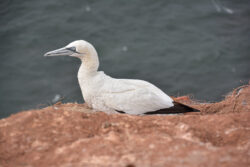 Helgoland_S_Gal_2020_236