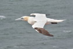 Helgoland_S_Gal_2020_237