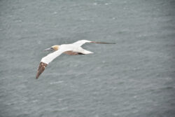 Helgoland_S_Gal_2020_238