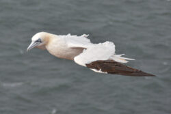 Helgoland_S_Gal_2020_239