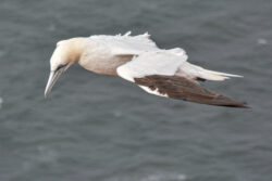Helgoland_S_Gal_2020_240
