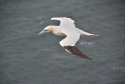 Helgoland_S_Gal_2020_241