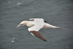 Helgoland_S_Gal_2020_242