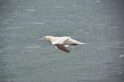 Helgoland_S_Gal_2020_243