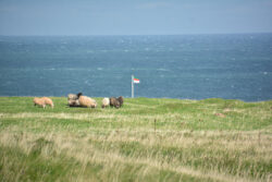Helgoland_S_Gal_2020_255