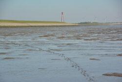 Nordsee_2021_Gal_123