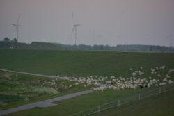 Nordsee_2021_Gal_166