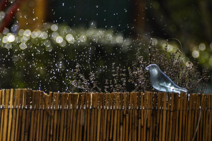 Regen_01