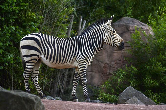 Zoo_05_2016_025